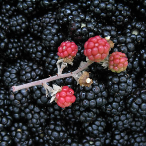 Φρούτα τού δάσους, Ζαγόρι, Ιωάννινα