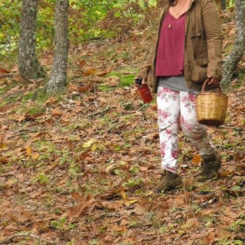 Συλλογή άγριων μανιταριών, Ζαγόρι, Ιωάννινα