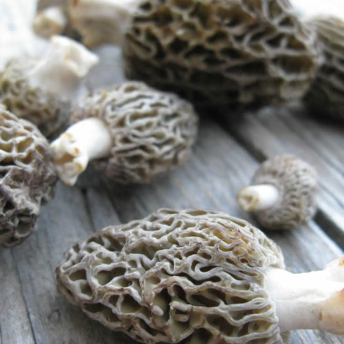 Morels, wild mushrooms for the forests of Zagori