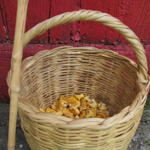 Κανθαρίσκοι ή κανθαρέλλες, άγρια μανιτάρια από τα δάση τού Ζαγορίου